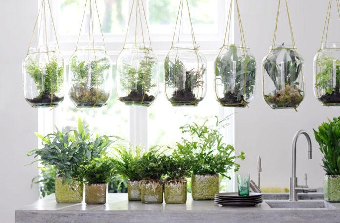 cuidados plantas interior