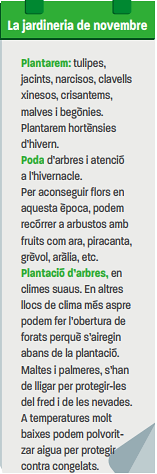 Àloe (Aloe arborescens), per Pep Aguadé