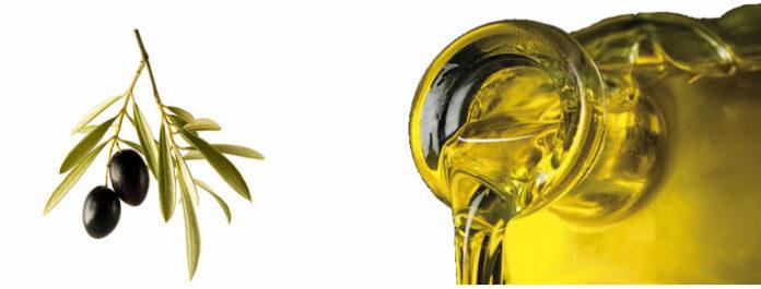 Acte de lliurament dels premis CDO al millor oli d'oliva verge extra 2017