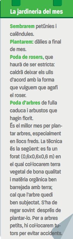 Espígol (Lavandula angustifolia) per Pep Aguadé