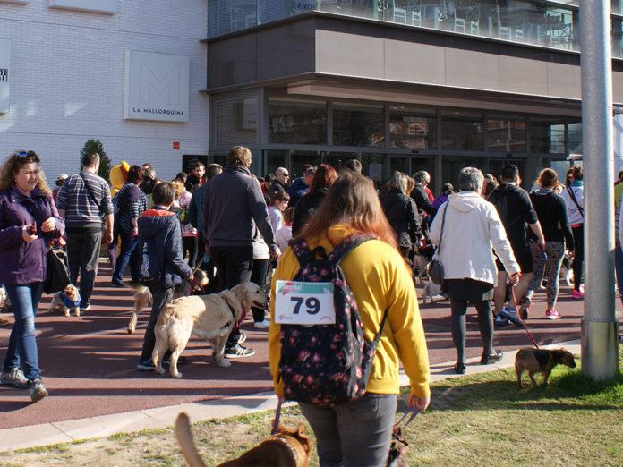 FiraReus inicia la programació de Bestial amb la passejada de gossos
