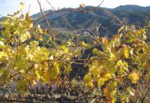 Vinyes i paisatge al Priorat