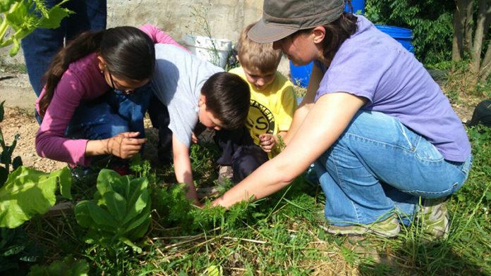 Horticultura i jardineria