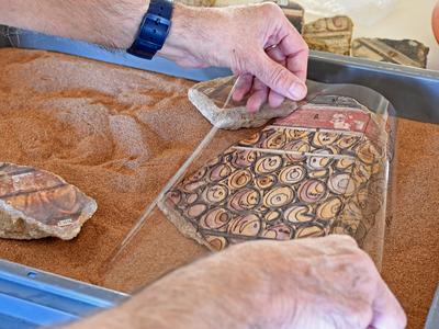 El Museu Nacional Arqueològic de Tarragona acollira activitats de Les Jornades Europees d'Arqueologia