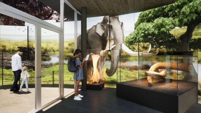 El jaciment del Barranc de la Boella ja disposa de projecte museogràfic