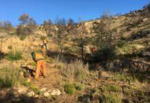 Fundació Repsol Reforesta a Flix