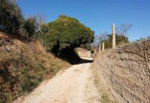 Camins de Reus, per Ester Borràs Giol